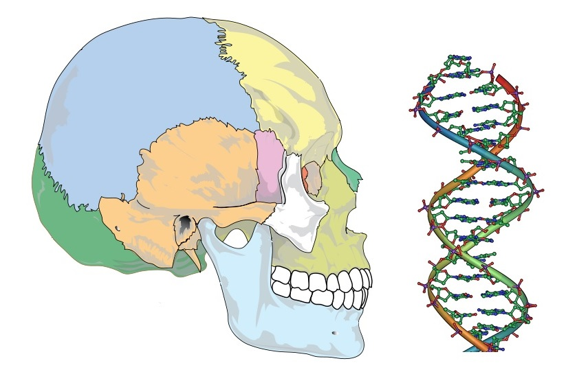 Skeleton DNA Image